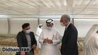 کاشت زعفران در قطر با کمک ایران