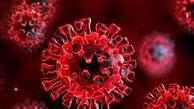 کروناویروس تا سه روز بر روی خیار باقی می ماند