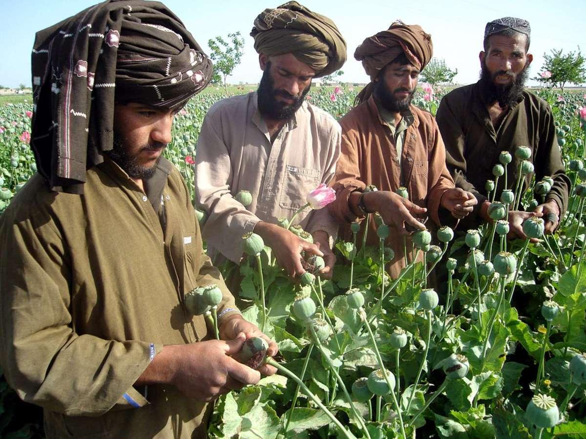 طالبان و تجارت خشخاش در افغانستان |  شکست آمریکا در مبارزه با تولید تریاک