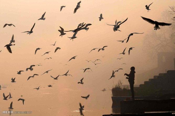 برترین تصاویر جهان در 17 بهمن ۹۵