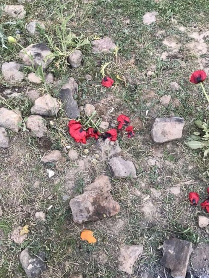 وضعیت شقایق ها در دشت لار