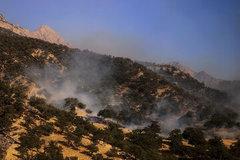 آتش سوزی در جنگل نخودکار باغملک