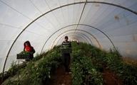 صادرات عسل، شراب و زیتون شهرکهای اسرائیل به امارات | فلسطین: محکوم است
