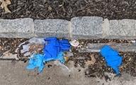 روز جهانی بدون پلاستیک؛اثرات مخرب پلاستیک بر محیطزیست