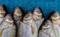 ماهی هم با سفره مردم خداحافظی کرد   قزلآلا ۸۰ هزار تومان شد