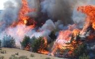 توصیه های متخصص جنگلهای فائو درباره سوختن زاگرس
