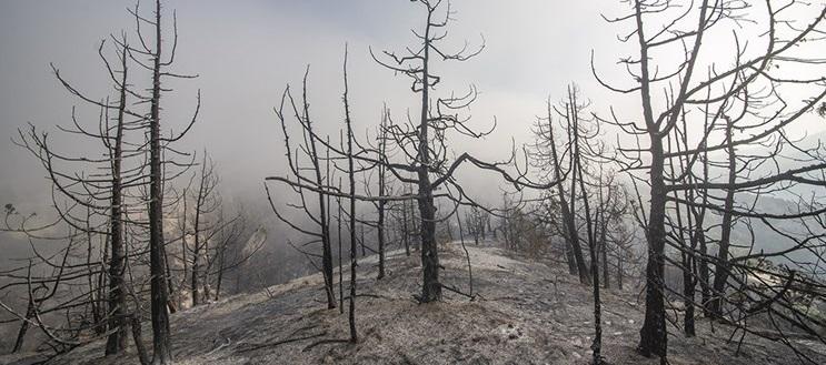 شعلهوری حریق در مناطق درازنو مهار شد | کاهش شدت وزش باد عامل مهار آتش سوزی