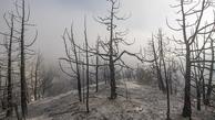 شعلهوری حریق در مناطق درازنو مهار شد   کاهش شدت وزش باد عامل مهار آتش سوزی