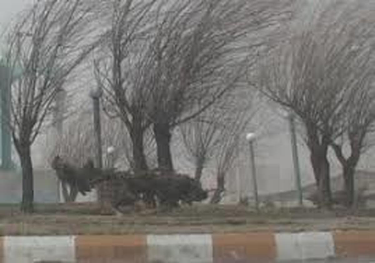 آسمان تهران صاف همراه با وزش باد شدید است