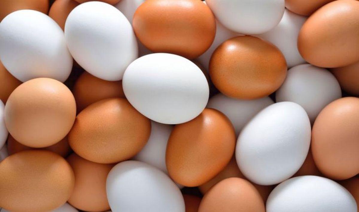 نحوه تشخیص تخم مرغ فاسد    توصیه های مهم در خصوص نگهداری تخممرغ