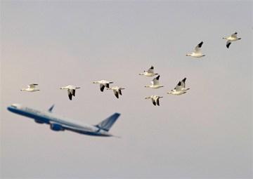 فرودگاه  | افزایش ۳۶ درصدی پروازهای عبوری از آسمان ایران