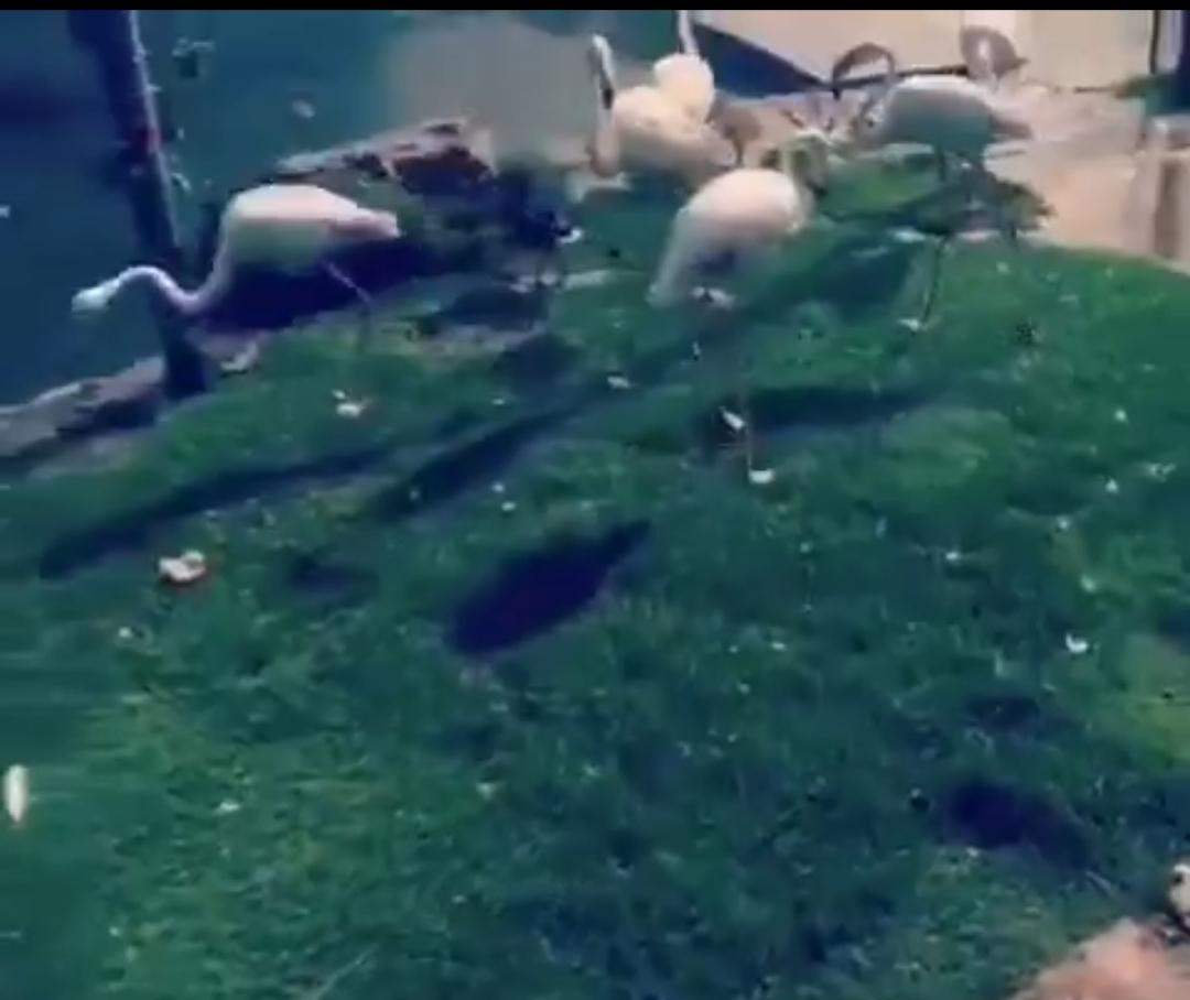 فیلمی از درون ویلای اشرافی و باغ وحش شخصی حسن میرکاظمی + ویدئو
