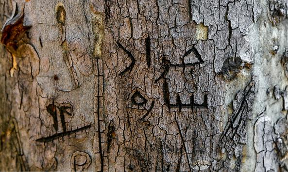 یادگاری نوشتن روی تنه درختان
