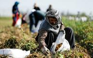 تبدیل کشاورز به ویلاساز با خرد شدن زمینهای کشاورزی