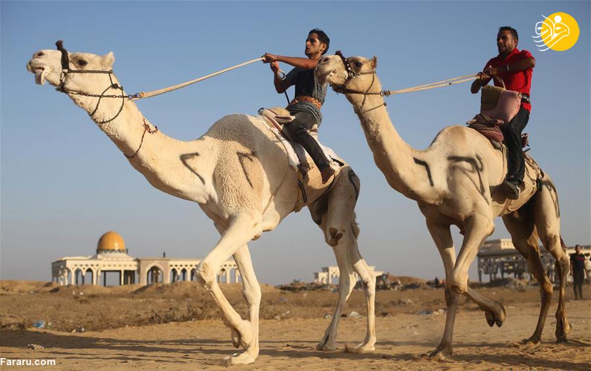 مسابقات شترسواری در غزه