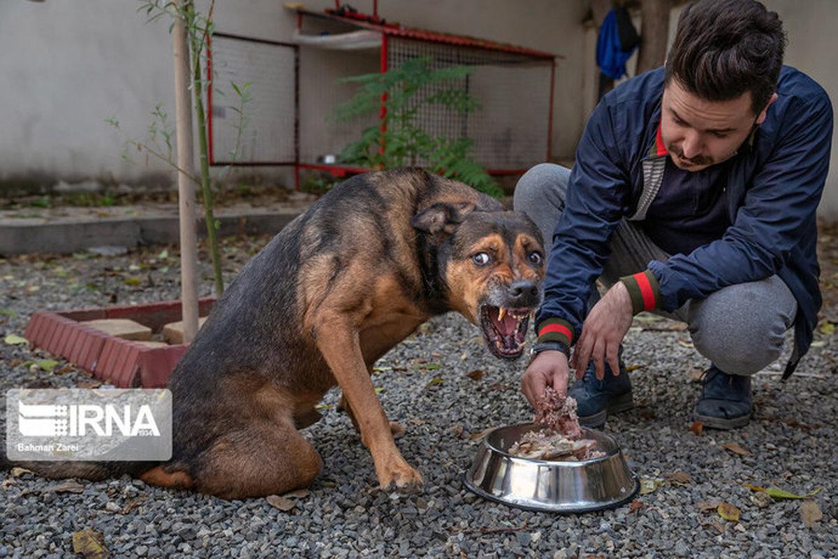 زندگی یک سگ معلول به نام قهوه ای