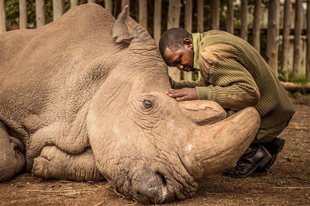 گزارش مهم سازمان ملل: یک میلیون گونه جانوری در آستانه انقراض هستند