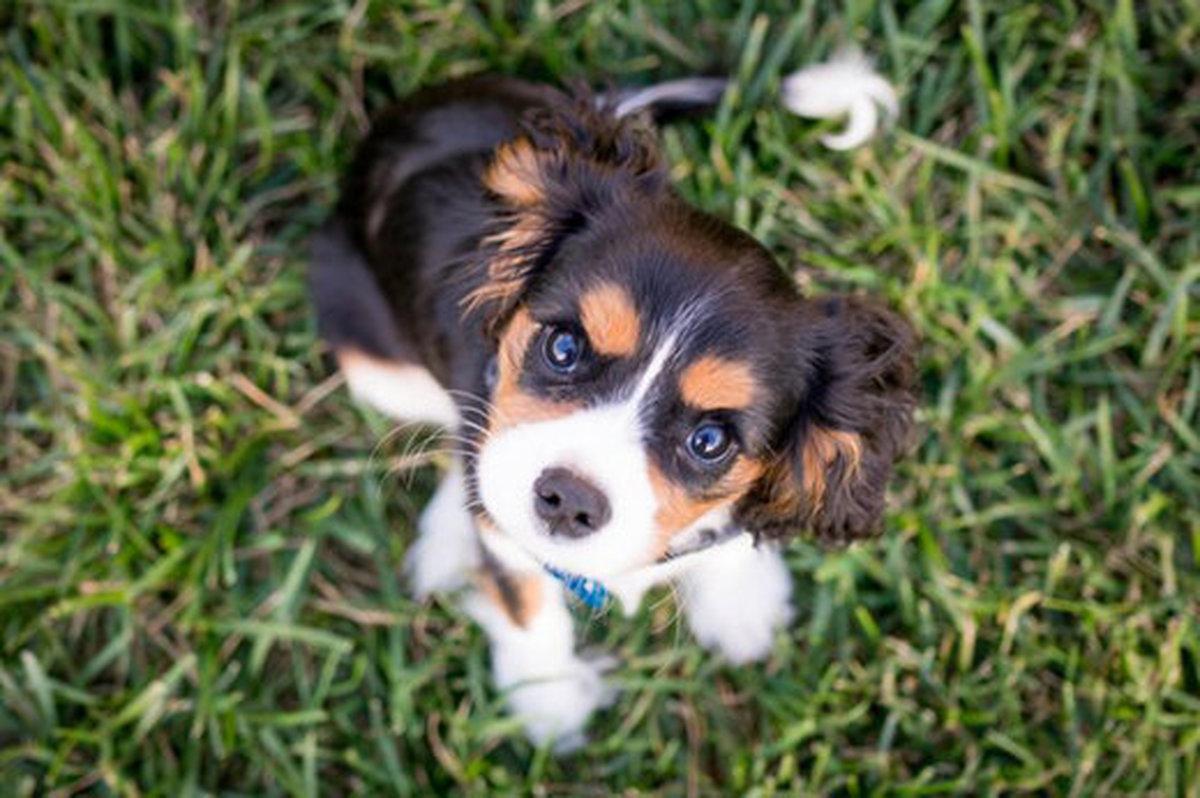 ممنوعیت سگ گردانی در محل بازی کودکان در بوستانها