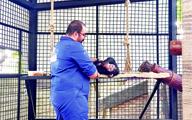 سه ماه زندگی در قفس   دامپزشک همراه یک بچهشامپانزه در جایگاه میمونهای رزوس باغ وحش ارم