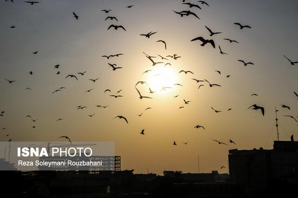 ادامه وقوع دمای ۴۹ درجه در خوزستان
