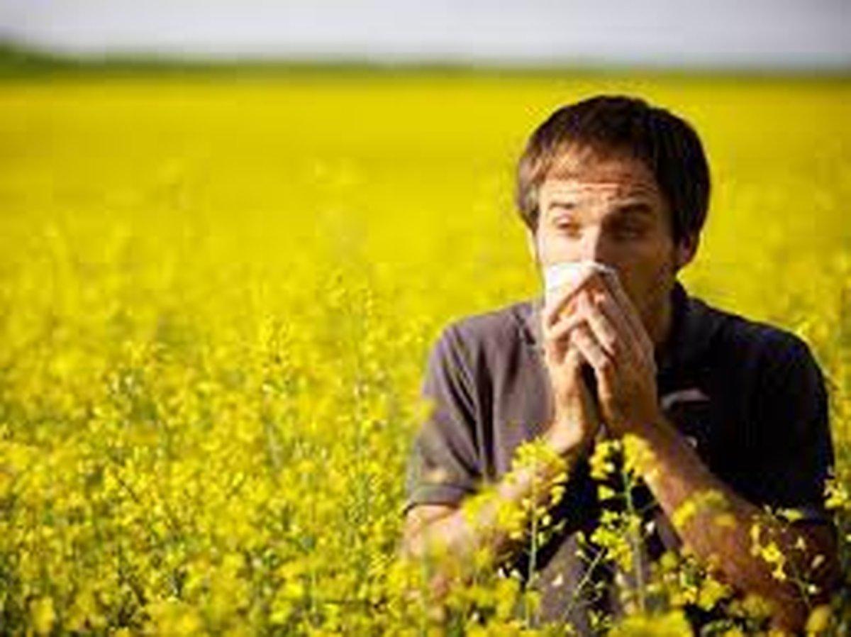 راهکارهای طب سنتی برای پیشگیری و درمان حساسیتهای بهاره