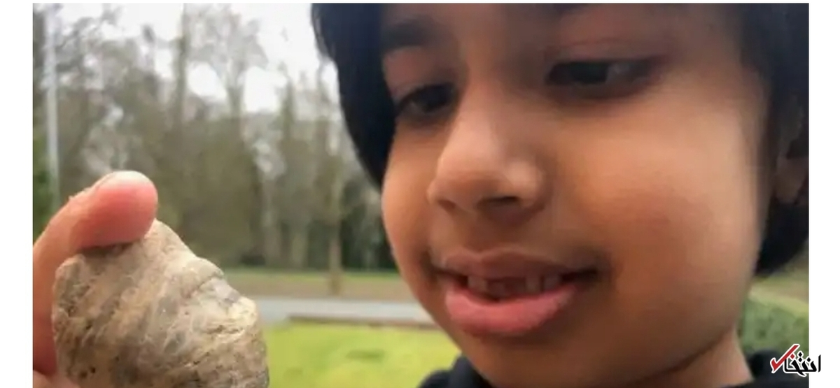 فسیل ۴۸۸ میلیون ساله توسط کودک ۶ ساله کشف شد