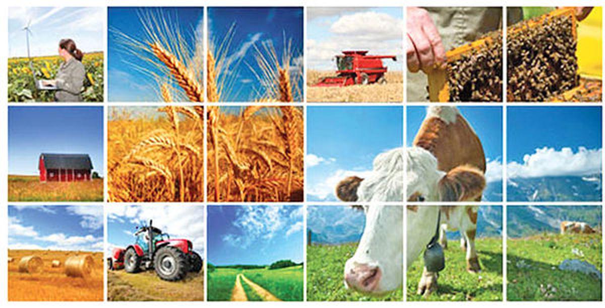 بازار کشاورزی در مرز هشدار | رشد انفجاری قیمتها در بازارهای جهانی نشان میدهد