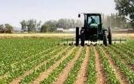 حمیدیه /داستان مجوز کشت برنج در خوزستان