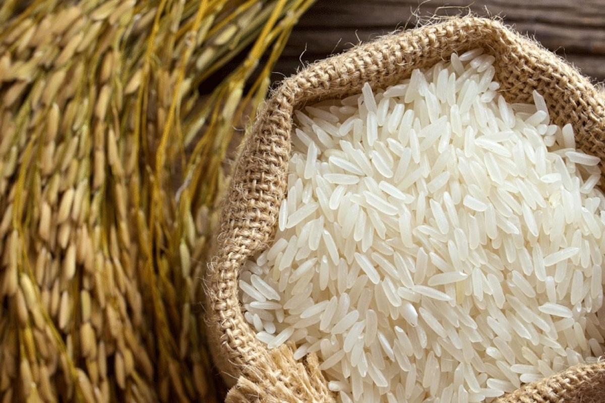 ظرف ۱۵ روز گذشته؛ برنج ایرانی ارزان شد