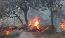 «نیمقرن» طول می کشد تا ذخایر جنگلهای سوخته  بازیابی شود