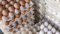 قیمت هر شانه تخم مرغ در بازار  |  کمبود عرضه تخم مرغ خواهد داشت