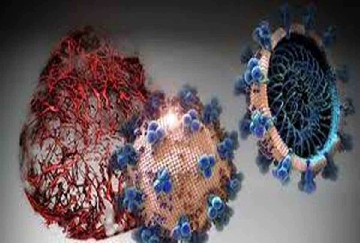 علائم ویروس جهش یافته آفریقایی |  شیوع ویروس آفریقای جنوبی و برزیلی
