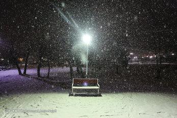 بارش شبانه برف، همدان را سفیدپوش کرد