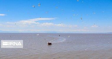 بازگشت فلامینگوها به دریاچه ارومیه