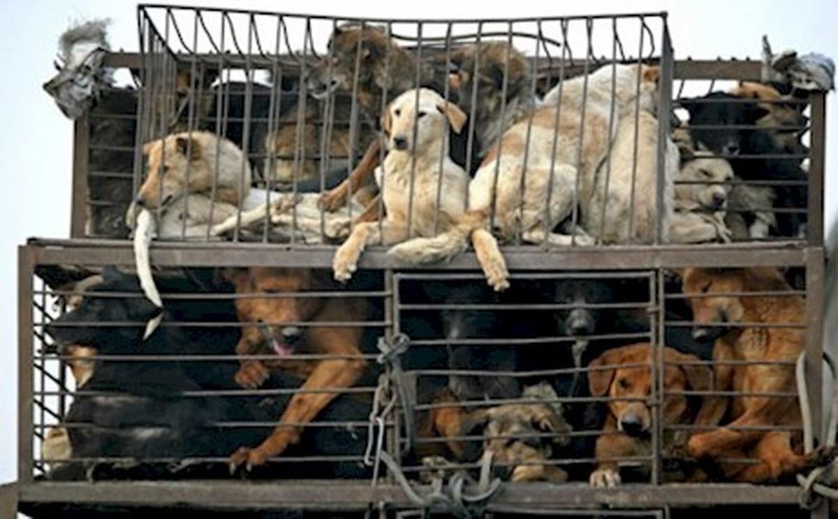تصویب قانون بی سابقه در پارلمان تایوان برای حمایت از حیوانات