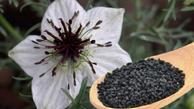 اثر گیاه معروف  برای داروی ضد کرونا  | میتوان از آن برای درمان آلرژی  استفاده کرد