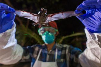 شکارچیان ویروس در تعقیب کرونا