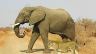 بخشش حیوانات زیباترین عکس جهان