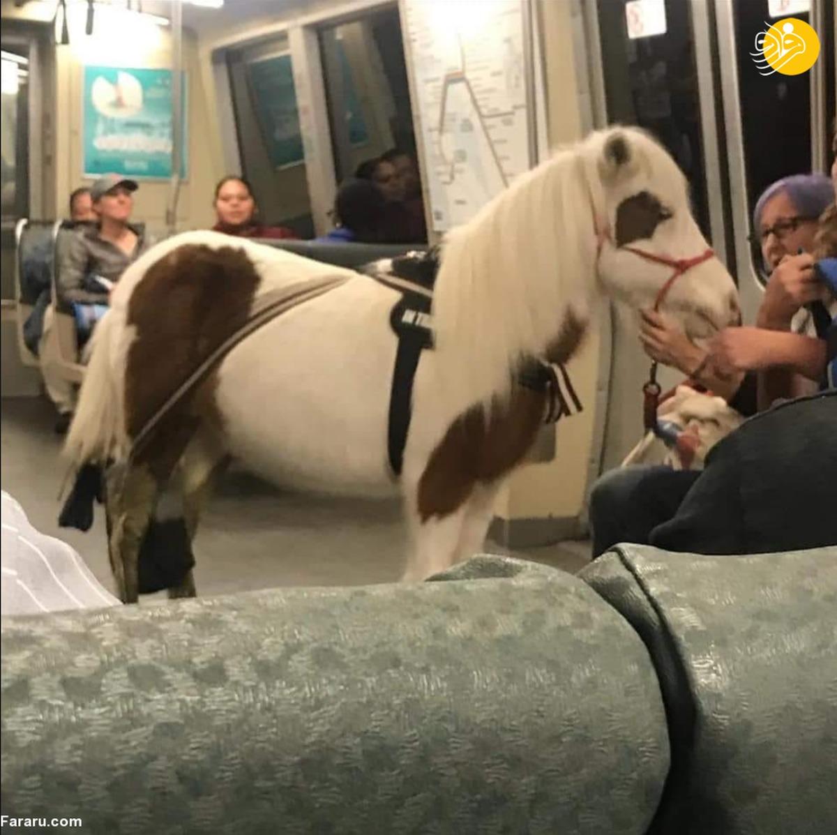 مسافری که با اسب سوار مترو شد!