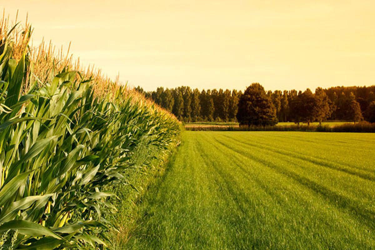 چقدر از خاک ایران مناسب کشاورزی است؟ | چشم انداز کشاورزی