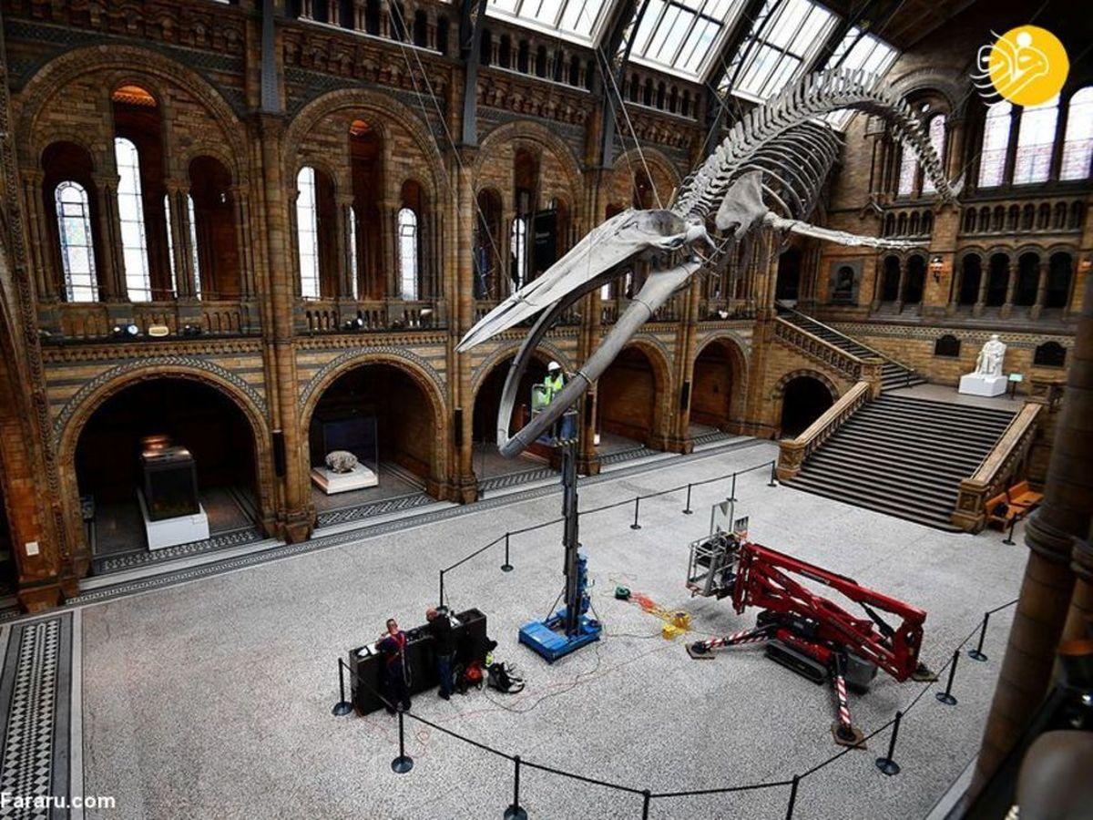 بازگشایی موزه تاریخ طبیعی لندن +عکس