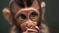 رقابت عکاسی      ژستهای جالبِ حیوانات مقابل دوربین عکاسی