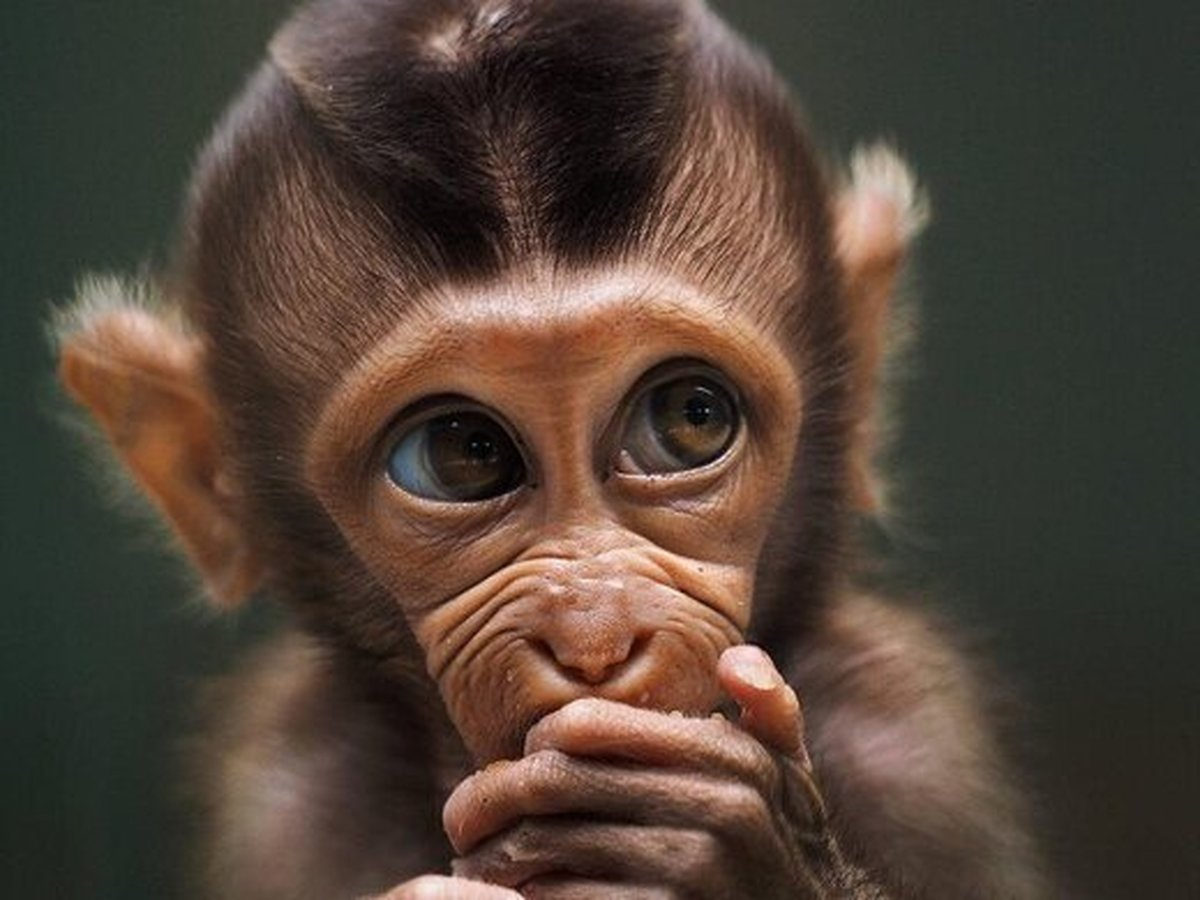 رقابت عکاسی  |   ژستهای جالبِ حیوانات مقابل دوربین عکاسی
