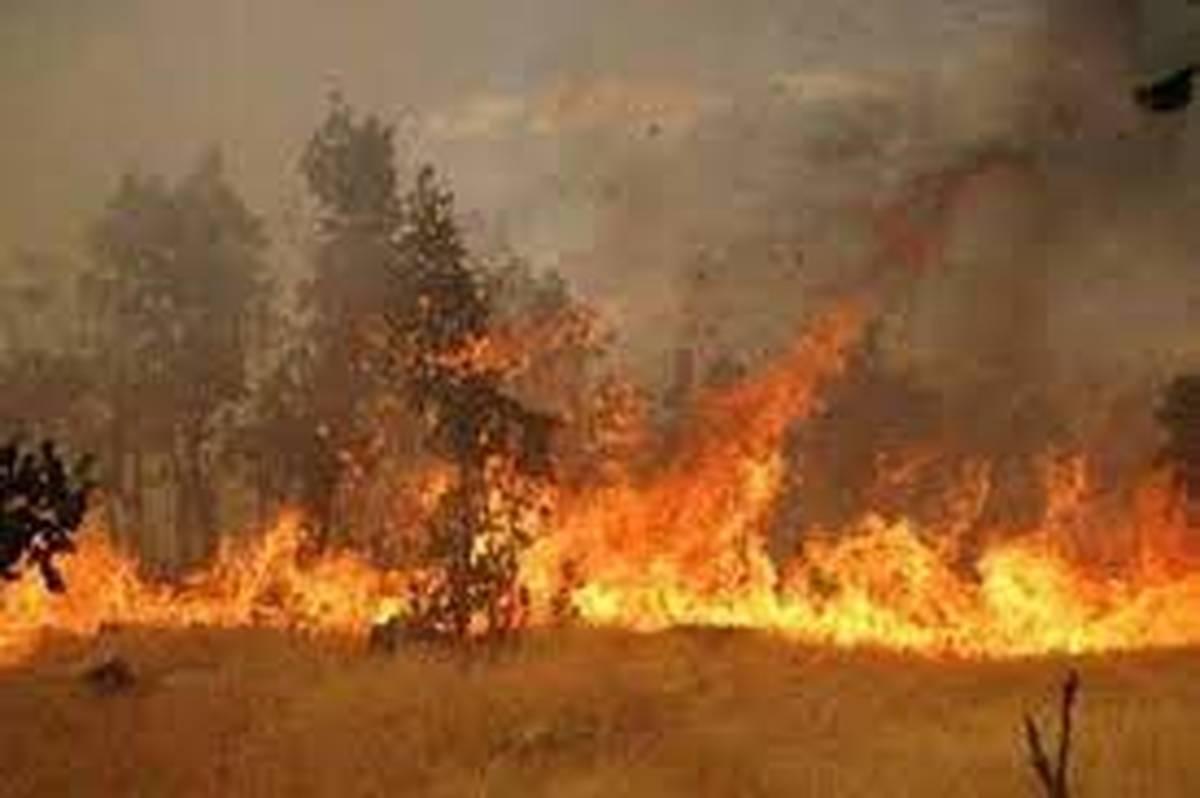 آتش سوزی در تالاب میانکاله     بیش از ۱۰۰ هکتار از اراضی سوخت