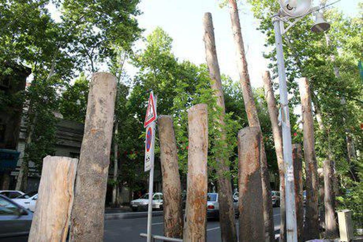 درختان خیابان ولیعصر(عج) دچار شوک حرارتی شدهاند