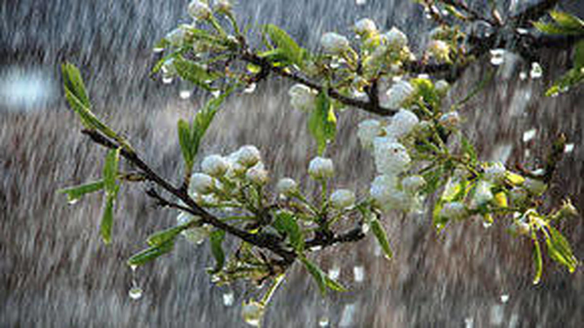 سامانه بارشی از فردا وارد کشور می شود| سامانه بارشی تا شنبه هفته آینده ماندگار است