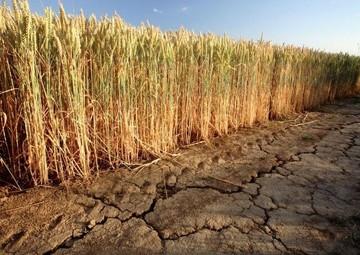 بحران جدی در کمین بخش کشاورزی