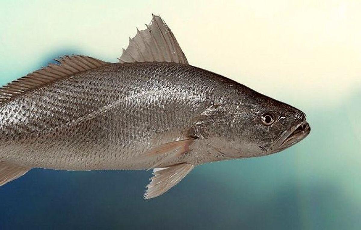 توان ارزآوری سه میلیون دلاری مرکز ماهیان زینتی محلات