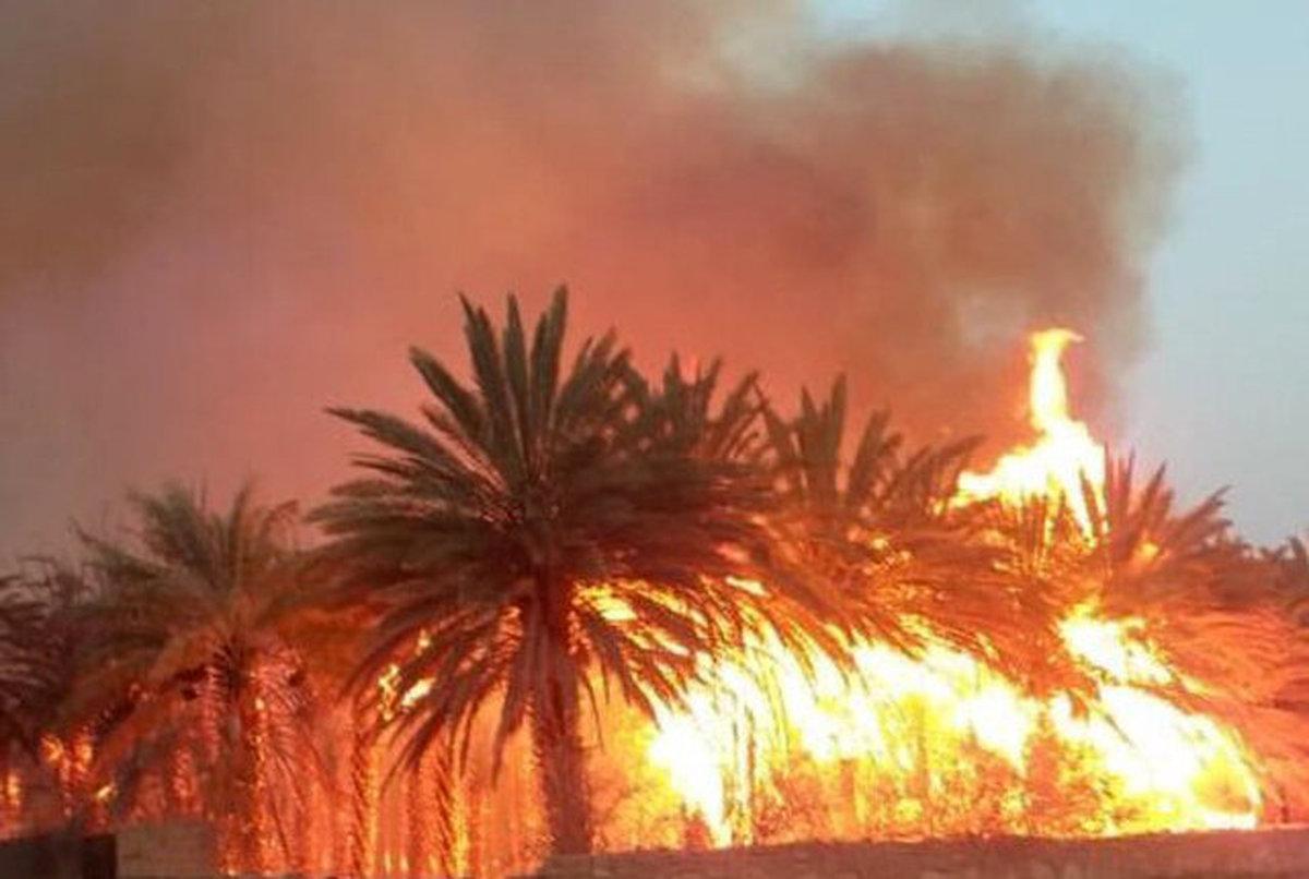 آتش سوزی  به هفت هکتار از نخلستانهای نیکشهر خسارت زد