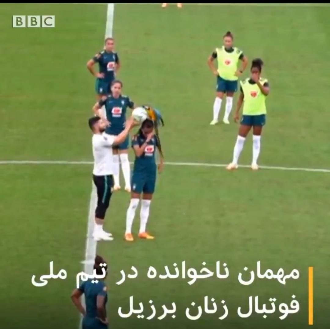 هنگام تمرین تیم ملی فوتبال زنان برزیل یک طوطی وارد زمین شد + ویدئو